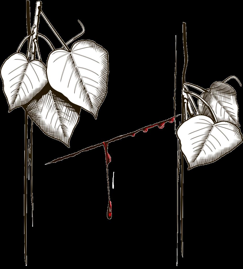 Sananga Plant, Tabernaemontana sananho